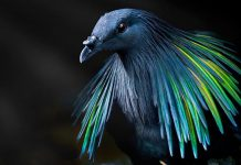 20 Extraordinary Birds You Might Find Attractive