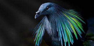 20 Extraordinary Birds You Might Find Attractive