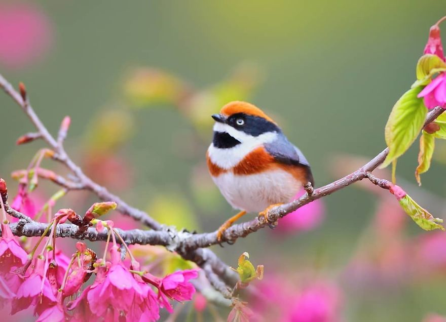 This Is A Black-Throated Bushtit, And Yes, That's The Word (20 pics)