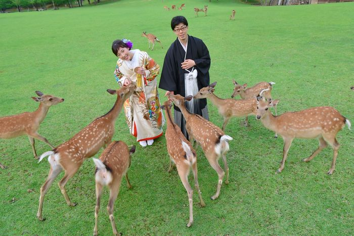Couple posing with deer