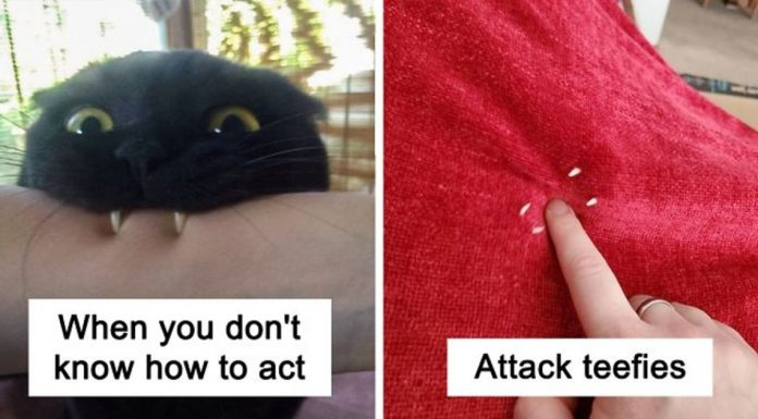 20 Times Cats Fascinated Owners By Their 'Teefies'