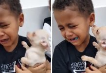 Little Boy Can't Stop Crying About How Cute Chihuahua Puppy Is