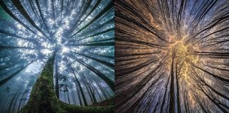 Skilled Photographer Captures Magical Forest Sites By Looking Upwards