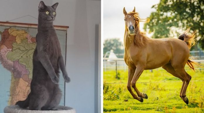 2O Best Entries In Comedy Pet Photo Competition