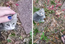 Stray Cat Brings The Woman Who Fed Her For A Few Days To Meet Her Kittens