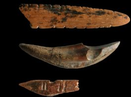 Earliest Use Of Bow And Arrow Weapons Outside Africa Discovered In Sri Lanka