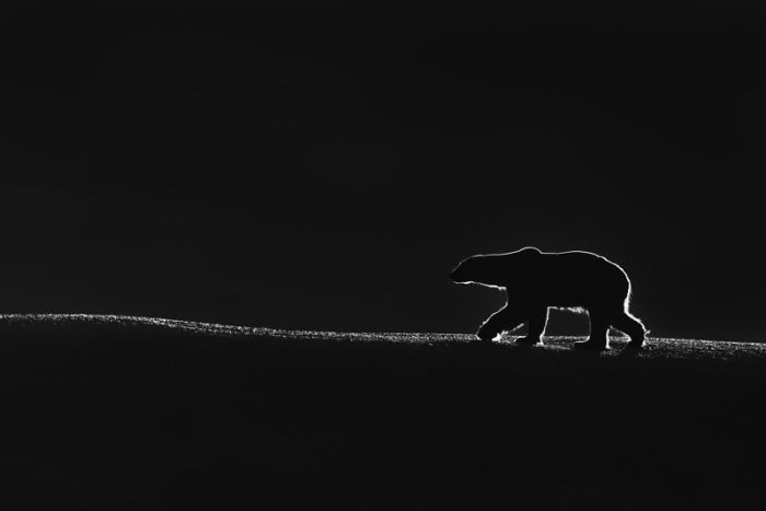 A bear is waling in the dark