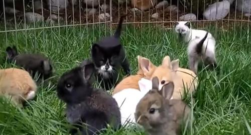 Kittens act like rabbits