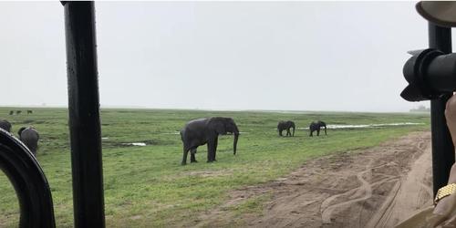 Mama elephant gives birth