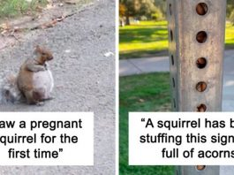 These Images Will Remind You That Squirrels Are Just Wonderful