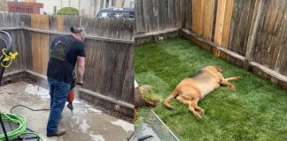 A Man Works Hard To Make His Girl Friend's Highly Aggressive Dog Comfortable