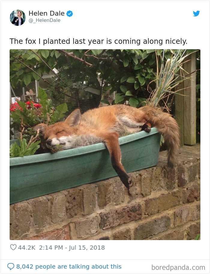 Fox Plant