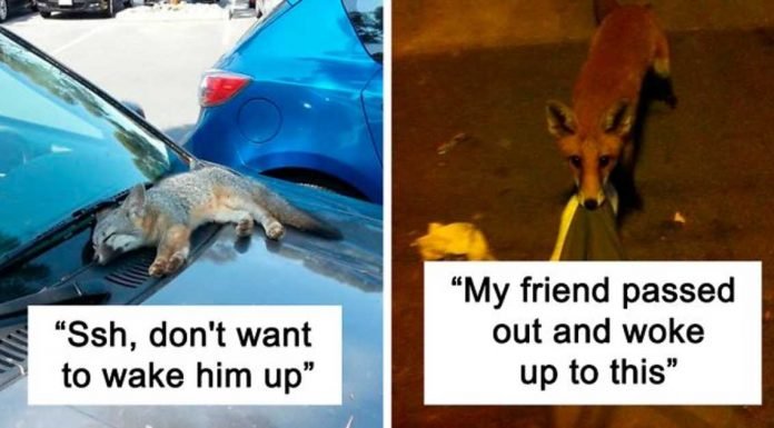 These Photos Are Proofs Of How Cute Foxes Really Are