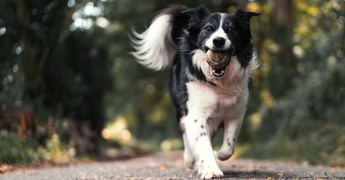 Teaching a Dog to Play Fetch