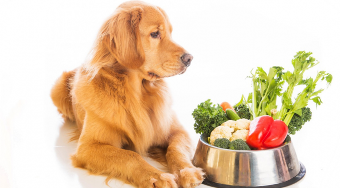 Ingredients Should Be in Your Dog Food