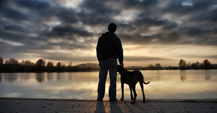 Reasons You Need To Honor Your Pet